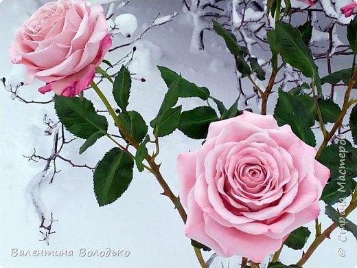 Добрый вечер мастера и мастерицы!!!Сегодня у меня розы.Вчера днем шел дождь,а ночь метель,вот и  фотографировала розы  в снегу. фото 1