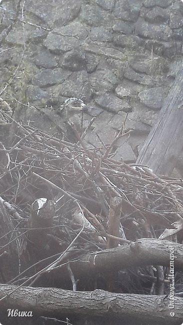 Добрый день, дорогие соседи! У меня ещё небольшая порция фото из Черкасского зоопарка (Украина). 1 часть о зоопарке тут https://stranamasterov.ru/node/1170753  2 часть тут https://stranamasterov.ru/node/1170809  это если кому будет интересно. А эта часть совсем маленькая. Большей частью и не о зверушках. Как я уже писала раньше, по всей территории зоопарка стоят вот такие деревянные скульптуры. Органично так  всё смотрится и видится! Эта скульптурка стоит на краю дорожки.  фото 12