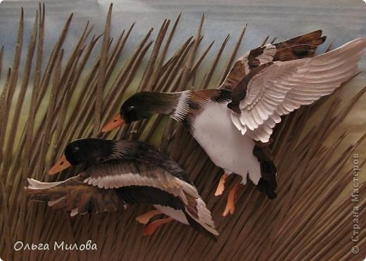 День улетающих птиц.  фото 2
