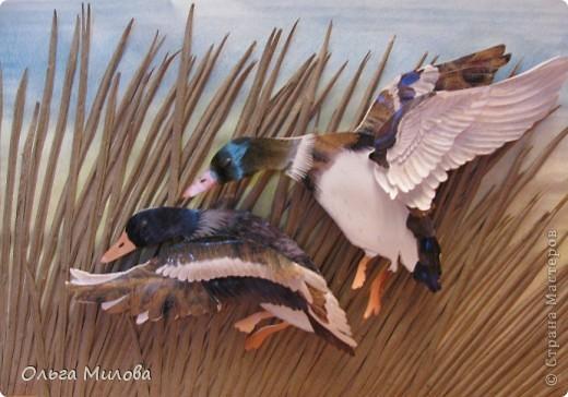 День улетающих птиц.  фото 9