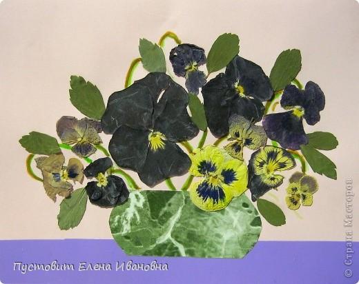Вот такой букетик анютиных глазок появился у нас в кружковой на одном из последних занятий.Работа выполнена в древней японской технике «ошибана»-в этой технике используются растения,засушенные под прессом. Научное название этого цветка по-латыни «виола триколор » — фиалка трехцветная. Принадлежит она к семейству фиалковых. Это двулетнее травянистое растение с одиночными цветками на длинных стеблях. Цветки ее действительно трех цветов: верхние их лепестки окрашены в фиолетовый или темно-синий цвета, нижние — в белый или желтый, а центральная часть оранжево-желтая. Этим она отличается от своей ближайшей родственницы — фиалки душистой. В на- роде существуют и другие ее названия: анютины глазки, братики, брат-и-сестра, сороканедужник, полуцвет, трехцветка, топорчики. Цветет фиалка трехцветная с апреля до осени. . Дикое растение со скромными желто-лиловыми цветками превратилось в крупные, восхитительные нежно-бархатистые анютины глазки. Первая попытка сделать этот цветок садовым была предпринята в XVI веке в садах принца Вильгельма Гессен-Кассельского. Очень любил фиалки Гёте. Каждую весну он сам их сеял в окрестностях Веймара. До сих пор эти цветы называют там «цветами Гёте», а немецкие садовники вывели сорта «Доктор Фауст» (почти черные).  фото 1