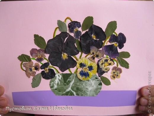 Вот такой букетик анютиных глазок появился у нас в кружковой на одном из последних занятий.Работа выполнена в древней японской технике «ошибана»-в этой технике используются растения,засушенные под прессом. Научное название этого цветка по-латыни «виола триколор » — фиалка трехцветная. Принадлежит она к семейству фиалковых. Это двулетнее травянистое растение с одиночными цветками на длинных стеблях. Цветки ее действительно трех цветов: верхние их лепестки окрашены в фиолетовый или темно-синий цвета, нижние — в белый или желтый, а центральная часть оранжево-желтая. Этим она отличается от своей ближайшей родственницы — фиалки душистой. В на- роде существуют и другие ее названия: анютины глазки, братики, брат-и-сестра, сороканедужник, полуцвет, трехцветка, топорчики. Цветет фиалка трехцветная с апреля до осени. . Дикое растение со скромными желто-лиловыми цветками превратилось в крупные, восхитительные нежно-бархатистые анютины глазки. Первая попытка сделать этот цветок садовым была предпринята в XVI веке в садах принца Вильгельма Гессен-Кассельского. Очень любил фиалки Гёте. Каждую весну он сам их сеял в окрестностях Веймара. До сих пор эти цветы называют там «цветами Гёте», а немецкие садовники вывели сорта «Доктор Фауст» (почти черные).  фото 10