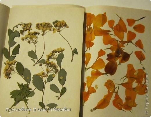 Гербарий (от лат. трава) это коллекция засушенных растений, собранная по определенным правилам. Как правило, высушенные растения крепятся на листы плотной бумаги или картона. В зависимости от типа растения на листе может быть представлено одно растение или несколько его видов. Впервые идея сушки растений появилась в 16 веке. Её  предложил итальянец, врач по образованию,  Луке Гини. Гербарий самого Гини не сохранился, однако до наших дней дошли коллекции его непосредственных учеников.     Растительный  мир настолько многообразен,что  в распоряжении учёных имеются коллекции гербариев, состоящие из миллионов единиц-таковы коллекции гербариев Национального музея в Париже-более 10 млн единиц, в России самый большой гербарий находится в Петербурге, в Ботаническом институте им. В.Л. Комарова. В его коллекции более 5 млн. листов растений, встречающихся как на территории России, так и стран расположенных рядом. В Лондоне гербарий Линнея и ботанического сада Кью  содержит  6,5 млн. образцов.    Засушенные растения можно использовать не только для создания справочного материала,каковым является гербарий,но и для выполнения картин и композиций в технике «ошибана»-так называется древнее японское искусство составлять картины из высушенных  под  прессом  растений.    Эту композицию «Букет в низкой вазе» Кристина Решетняк выполнила  в этой древней японской технике.  фото 3