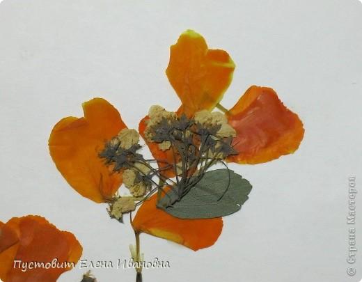 Гербарий (от лат. трава) это коллекция засушенных растений, собранная по определенным правилам. Как правило, высушенные растения крепятся на листы плотной бумаги или картона. В зависимости от типа растения на листе может быть представлено одно растение или несколько его видов. Впервые идея сушки растений появилась в 16 веке. Её  предложил итальянец, врач по образованию,  Луке Гини. Гербарий самого Гини не сохранился, однако до наших дней дошли коллекции его непосредственных учеников.     Растительный  мир настолько многообразен,что  в распоряжении учёных имеются коллекции гербариев, состоящие из миллионов единиц-таковы коллекции гербариев Национального музея в Париже-более 10 млн единиц, в России самый большой гербарий находится в Петербурге, в Ботаническом институте им. В.Л. Комарова. В его коллекции более 5 млн. листов растений, встречающихся как на территории России, так и стран расположенных рядом. В Лондоне гербарий Линнея и ботанического сада Кью  содержит  6,5 млн. образцов.    Засушенные растения можно использовать не только для создания справочного материала,каковым является гербарий,но и для выполнения картин и композиций в технике «ошибана»-так называется древнее японское искусство составлять картины из высушенных  под  прессом  растений.    Эту композицию «Букет в низкой вазе» Кристина Решетняк выполнила  в этой древней японской технике.  фото 8