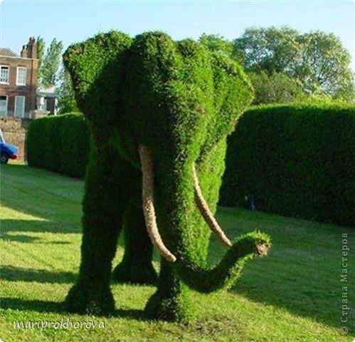 Слонёнок Джим! фото 9