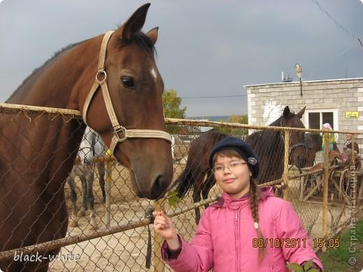 Этот день я выбрала не случайно, это день моего рождения, а еще я родилась в год лошади. Лошадей я очень люблю, это очень умные и красивые животные.  На коне Я катался на коне летней ночью при луне Мы скакали по лугам по лесам и по горам... А под утро на рассвете обогнали даже ветер! Я катался на коне - только жалко, что во сне. (Тим Собакин)  фото 3