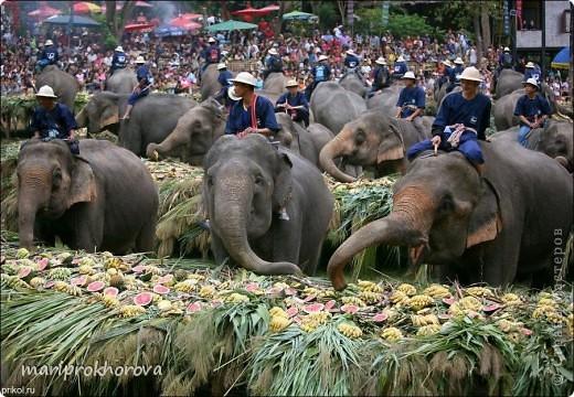 Слонёнок Джим! фото 6