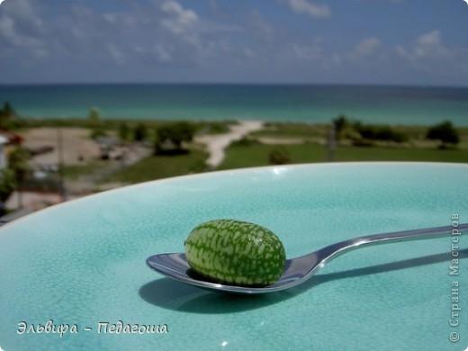 3 августа обязательно надо отметить День арбуза! Для начала обратимся к истории.  фото 3