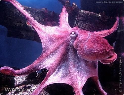 День осьминога фото 6