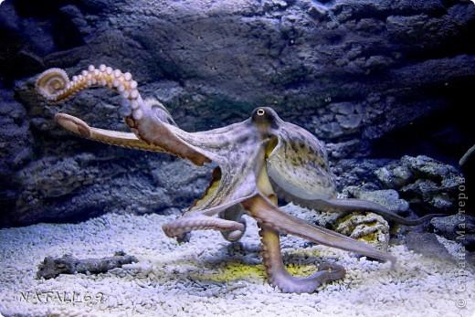 День осьминога фото 4