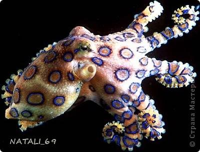День осьминога фото 8