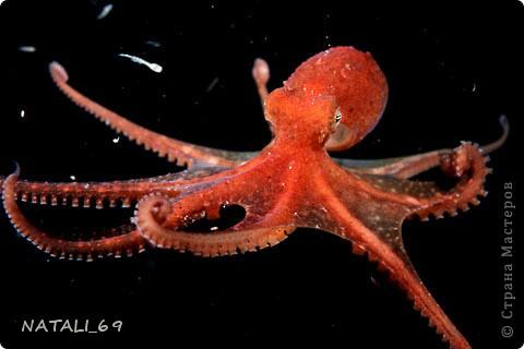 День осьминога фото 9