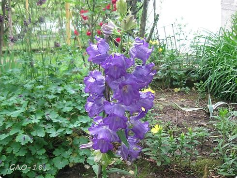 День фиолетово- лилового настроения фото 2