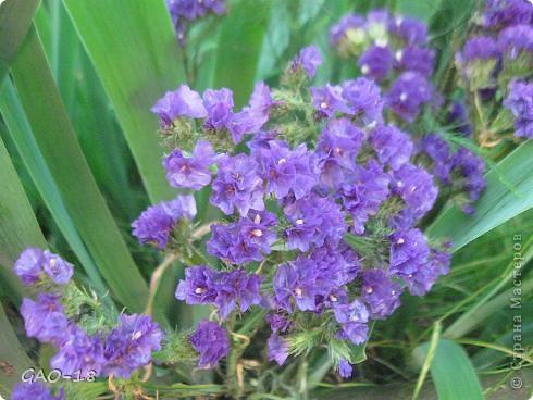 День фиолетово- лилового настроения фото 6