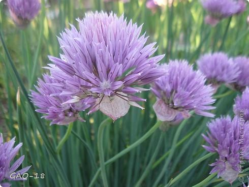 День фиолетово- лилового настроения фото 5