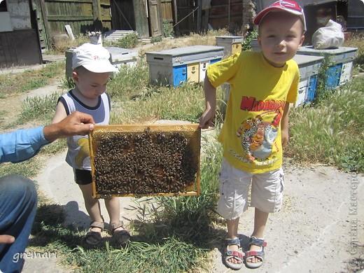 2 июля — Пчелиный день: «Рой роится, Зосима- Савватий веселится».  Русские святые Зосима и Савватий яляются покровителями пчёл. В этот день по чистой росистой траве и стар и млад выходили в луга, наблюдали за работой пчёл, шли на пасеки, слушали рассказы мудрых русских пасечников, знающих, как растет трава, как цветут цветы, как собирается по многим цветам сладкий мед в соты.  С сайта Русский фольклор.  фото 8