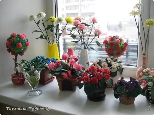 Цветоводам очень полюбилось это довольно неприхотливое растение, которое способно цвести круглый год. Селекционеры каждый год выводят все новые сорта, разнообразные по окраске и форме цветков.    фото 9