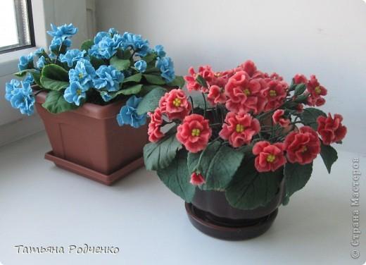 Цветоводам очень полюбилось это довольно неприхотливое растение, которое способно цвести круглый год. Селекционеры каждый год выводят все новые сорта, разнообразные по окраске и форме цветков.    фото 1