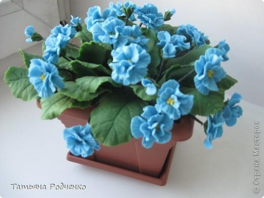 Цветоводам очень полюбилось это довольно неприхотливое растение, которое способно цвести круглый год. Селекционеры каждый год выводят все новые сорта, разнообразные по окраске и форме цветков.    фото 8