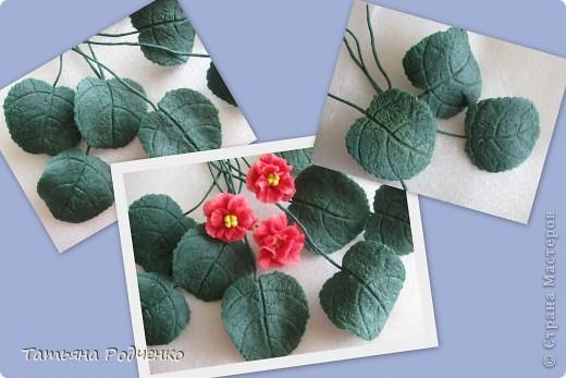 Цветоводам очень полюбилось это довольно неприхотливое растение, которое способно цвести круглый год. Селекционеры каждый год выводят все новые сорта, разнообразные по окраске и форме цветков.    фото 7