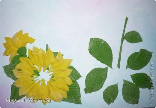 Подсолнухи - один из моих любимых цветов.  Солнечные, теплые и такие величественные - очень добрые цветы. фото 4