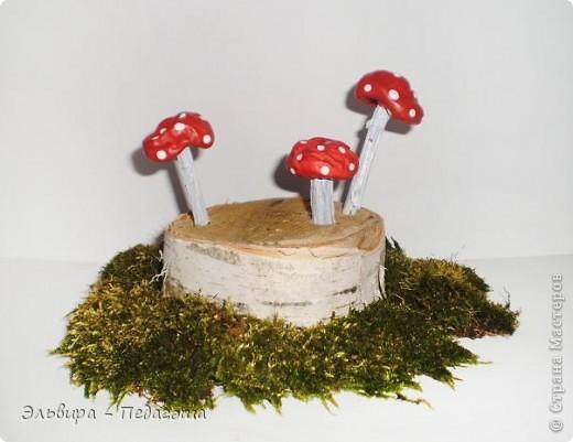 В честь Дня работников леса приглашаю вас, уважаемые жители Страны Мастеров, на мою мини-выставку фотографий грибов. У самодельных грибов ножки - это веточки старого дерева, а шляпки - это каштаны, которые мне привезла ещё прошлой осенью коллега, за что ей огромное Спасибо!  фото 1