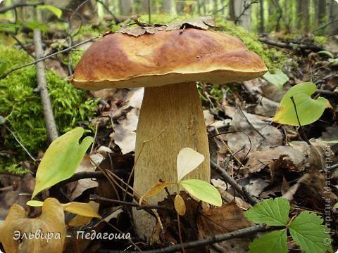 В честь Дня работников леса приглашаю вас, уважаемые жители Страны Мастеров, на мою мини-выставку фотографий грибов. У самодельных грибов ножки - это веточки старого дерева, а шляпки - это каштаны, которые мне привезла ещё прошлой осенью коллега, за что ей огромное Спасибо!  фото 6