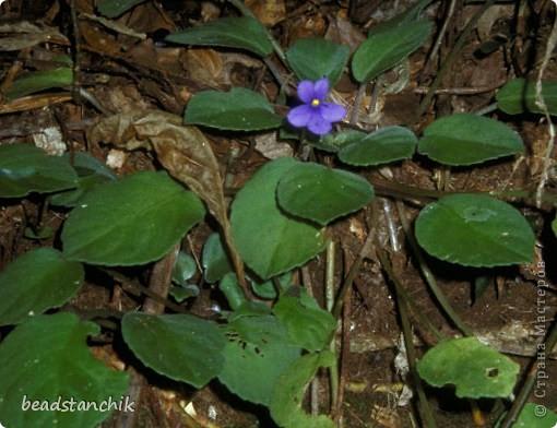 Моя работа посвящена Сенполии - чудесному комнатному растению! Любимый цветок, выполнен в технике бисероплетения.  фото 8