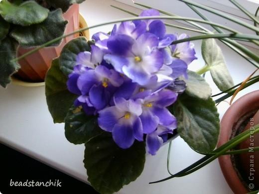 Моя работа посвящена Сенполии - чудесному комнатному растению! Любимый цветок, выполнен в технике бисероплетения.  фото 7