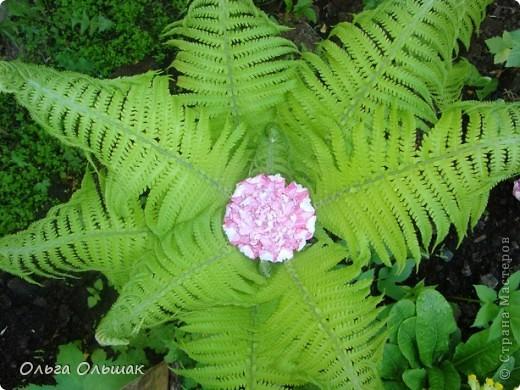 Вот такой цветок расцвёл у нас в папоротнике,не дождавшись 7 июля. фото 1