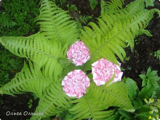 Вот такой цветок расцвёл у нас в папоротнике,не дождавшись 7 июля. фото 3