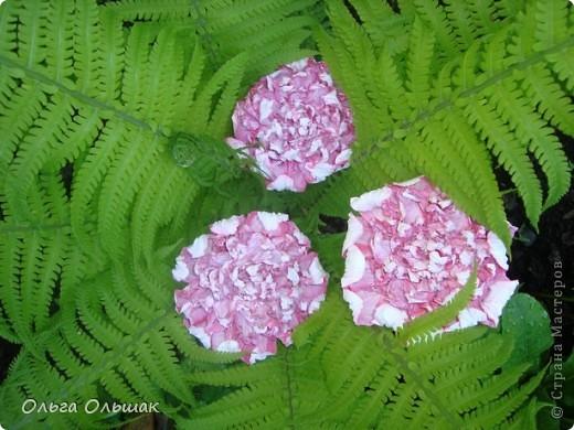 Вот такой цветок расцвёл у нас в папоротнике,не дождавшись 7 июля. фото 4