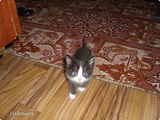 11 сентября-День домашнего любимца. У меня очень долго не было домашнего питомца, а совсем недавно я стала хозяйкой замечательного котеночка.  Старалась слепить максимально похожую уменьшенную копию.  фото 4
