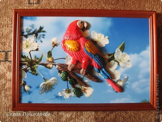 В детстве у меня было два волнистых попугайчика Кеша и Маша. Как-то раз мы с братом взяли поиграть Кешу, и по неосторожности, он у нас улетел. Как сейчас помню, как мы его ловили по всем дворам, на помощь нам тогда пришли родители, соседи, так как он ловко перелетал с одного двора на другой. Это был для нас большой урок. В своей конкурсной работе я изобразила попугая на воле, а попугай Ара выбран не случайно, так как именно о таком попугае я мечтала, большой, красивый, яркий. фото 4