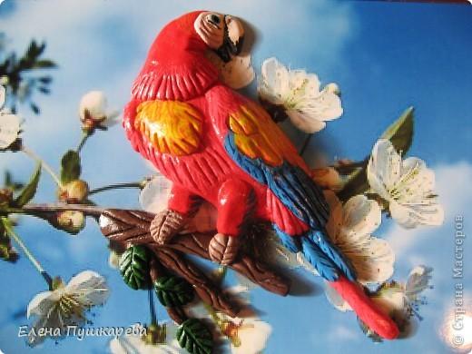 В детстве у меня было два волнистых попугайчика Кеша и Маша. Как-то раз мы с братом взяли поиграть Кешу, и по неосторожности, он у нас улетел. Как сейчас помню, как мы его ловили по всем дворам, на помощь нам тогда пришли родители, соседи, так как он ловко перелетал с одного двора на другой. Это был для нас большой урок. В своей конкурсной работе я изобразила попугая на воле, а попугай Ара выбран не случайно, так как именно о таком попугае я мечтала, большой, красивый, яркий. фото 1