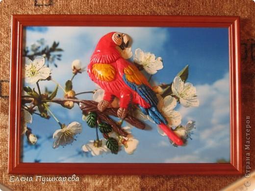 В детстве у меня было два волнистых попугайчика Кеша и Маша. Как-то раз мы с братом взяли поиграть Кешу, и по неосторожности, он у нас улетел. Как сейчас помню, как мы его ловили по всем дворам, на помощь нам тогда пришли родители, соседи, так как он ловко перелетал с одного двора на другой. Это был для нас большой урок. В своей конкурсной работе я изобразила попугая на воле, а попугай Ара выбран не случайно, так как именно о таком попугае я мечтала, большой, красивый, яркий. фото 3