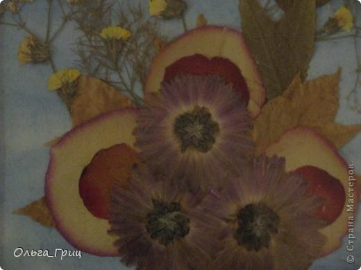 Герба́рий (лат. herbárium, от herba — «трава») — коллекция засушенных растений, препарированных в согласии с определёнными правилами. Обычно гербарные образцы после высушивания монтируются на листах плотной бумаги. В зависимости от вида растения на гербарном листе может быть представлена целая особь, группа особей или часть крупного (например, древесного) растения. фото 1