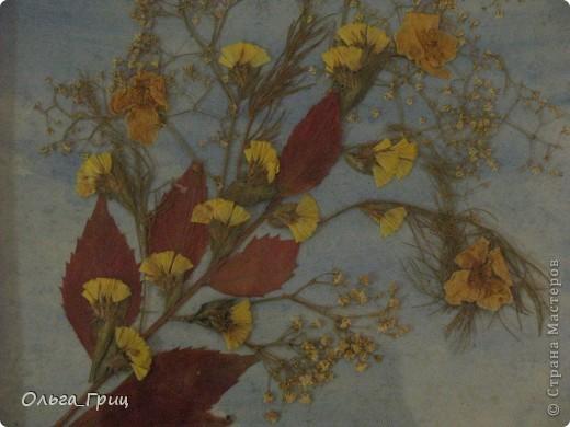 Герба́рий (лат. herbárium, от herba — «трава») — коллекция засушенных растений, препарированных в согласии с определёнными правилами. Обычно гербарные образцы после высушивания монтируются на листах плотной бумаги. В зависимости от вида растения на гербарном листе может быть представлена целая особь, группа особей или часть крупного (например, древесного) растения. фото 2