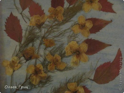 Герба́рий (лат. herbárium, от herba — «трава») — коллекция засушенных растений, препарированных в согласии с определёнными правилами. Обычно гербарные образцы после высушивания монтируются на листах плотной бумаги. В зависимости от вида растения на гербарном листе может быть представлена целая особь, группа особей или часть крупного (например, древесного) растения. фото 3