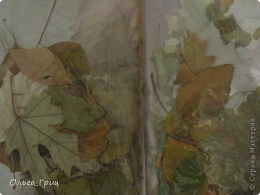 Герба́рий (лат. herbárium, от herba — «трава») — коллекция засушенных растений, препарированных в согласии с определёнными правилами. Обычно гербарные образцы после высушивания монтируются на листах плотной бумаги. В зависимости от вида растения на гербарном листе может быть представлена целая особь, группа особей или часть крупного (например, древесного) растения. фото 4