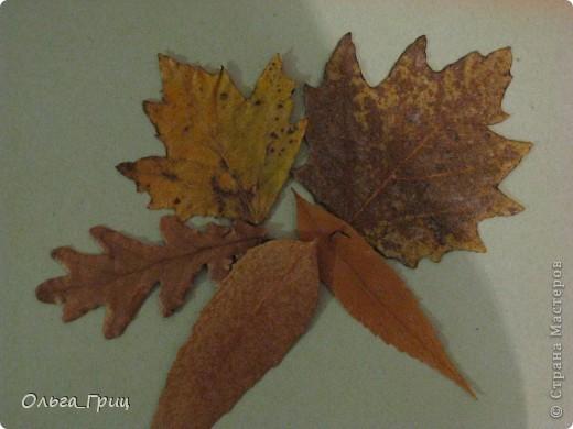 Герба́рий (лат. herbárium, от herba — «трава») — коллекция засушенных растений, препарированных в согласии с определёнными правилами. Обычно гербарные образцы после высушивания монтируются на листах плотной бумаги. В зависимости от вида растения на гербарном листе может быть представлена целая особь, группа особей или часть крупного (например, древесного) растения. фото 6