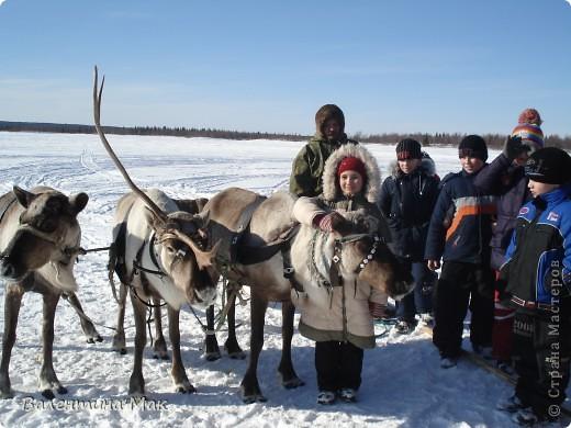 Я хочу рассказать вам о северном народе- СААМИ, который проживает у нас на севере в Мурманской области (Кольский полуостров) в селе Ловозеро. фото 3