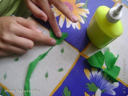 Кислица (Oxalis) - это многолетнее травянистое растение семейства кисличных с тройчатосложными листьями на длинных черешках, со стелющимися побегами и скромными цветками различной окраски: от белой до фиолетовой. фото 5