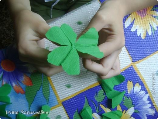 Кислица (Oxalis) - это многолетнее травянистое растение семейства кисличных с тройчатосложными листьями на длинных черешках, со стелющимися побегами и скромными цветками различной окраски: от белой до фиолетовой. фото 6