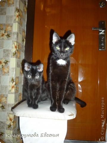 """11 сентября - день домашних любимцев и день моего рождения))) В симпатичной кроватке лежит котенок Дуня) Дуня - это мой кот, но он уже взрослый. Я решила слепить его, когда он был маленький и тем самым напомнить ему детство. Вообще """"Дуня"""" - имя женское))) Но была такая история: """"Когда Дуня был маленький, он был сильно похож на девочку))) Папа посмотрел - девочка. Вот мы и дали ему такое имя) Но примерно через месяц я заметила, что у котенка грубая шерсть (как у всех котов). А потом выяснилось, что Дуня - мальчик) Но к имени мы уже привыкли и поэтому не стали переименовывать. Между прочем, такие же ошибки были у нас еще с 2 кошками))) фото 9"""