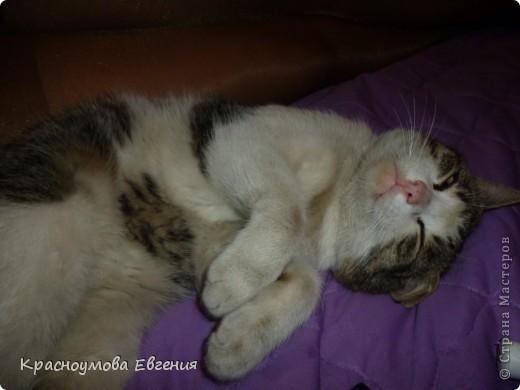 """11 сентября - день домашних любимцев и день моего рождения))) В симпатичной кроватке лежит котенок Дуня) Дуня - это мой кот, но он уже взрослый. Я решила слепить его, когда он был маленький и тем самым напомнить ему детство. Вообще """"Дуня"""" - имя женское))) Но была такая история: """"Когда Дуня был маленький, он был сильно похож на девочку))) Папа посмотрел - девочка. Вот мы и дали ему такое имя) Но примерно через месяц я заметила, что у котенка грубая шерсть (как у всех котов). А потом выяснилось, что Дуня - мальчик) Но к имени мы уже привыкли и поэтому не стали переименовывать. Между прочем, такие же ошибки были у нас еще с 2 кошками))) фото 10"""