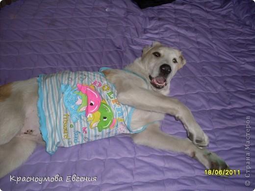 """11 сентября - день домашних любимцев и день моего рождения))) В симпатичной кроватке лежит котенок Дуня) Дуня - это мой кот, но он уже взрослый. Я решила слепить его, когда он был маленький и тем самым напомнить ему детство. Вообще """"Дуня"""" - имя женское))) Но была такая история: """"Когда Дуня был маленький, он был сильно похож на девочку))) Папа посмотрел - девочка. Вот мы и дали ему такое имя) Но примерно через месяц я заметила, что у котенка грубая шерсть (как у всех котов). А потом выяснилось, что Дуня - мальчик) Но к имени мы уже привыкли и поэтому не стали переименовывать. Между прочем, такие же ошибки были у нас еще с 2 кошками))) фото 8"""