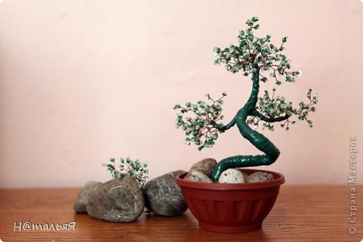 Искусство бонсай в переводе на русский язык означает «дерево в горшке». Возникло это искусство в 200 году до н. э. в Китае, точнее изначально оно звучало как «пан-сан». Несколько веков позднее японцы вместе с буддизмом освоили это искусство, довели его до совершенства и теперь оно считается традиционно японским.    фото 1