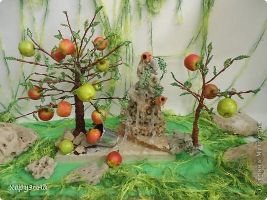 Именно так растут вкуснейшие яблоки на Голанских высотах фото 1