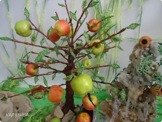 Именно так растут вкуснейшие яблоки на Голанских высотах фото 5